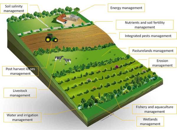 Sürdürülebilir Tarım - Ücretsiz PDF