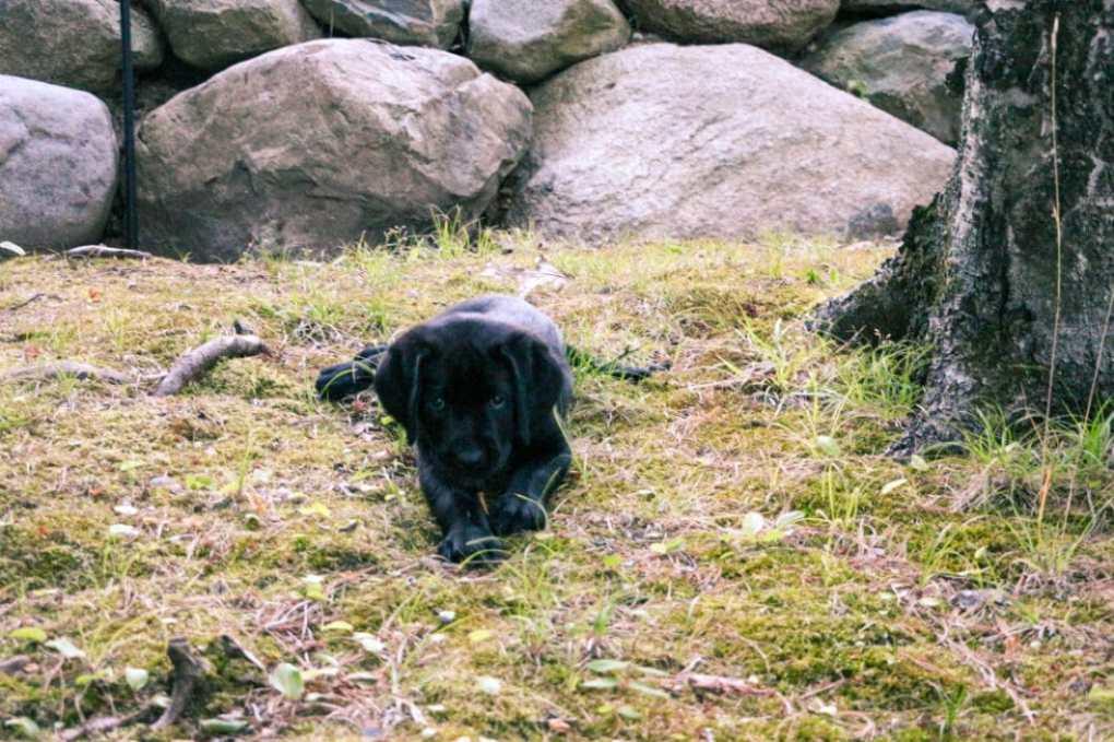 Buck loved all the sticks!