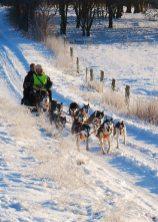 Dog sledding in Roskilde