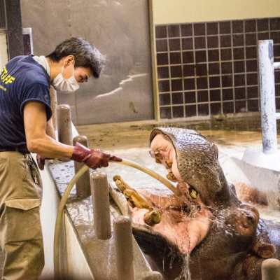 Spending a Day at Tokyo's Ueno Zoo