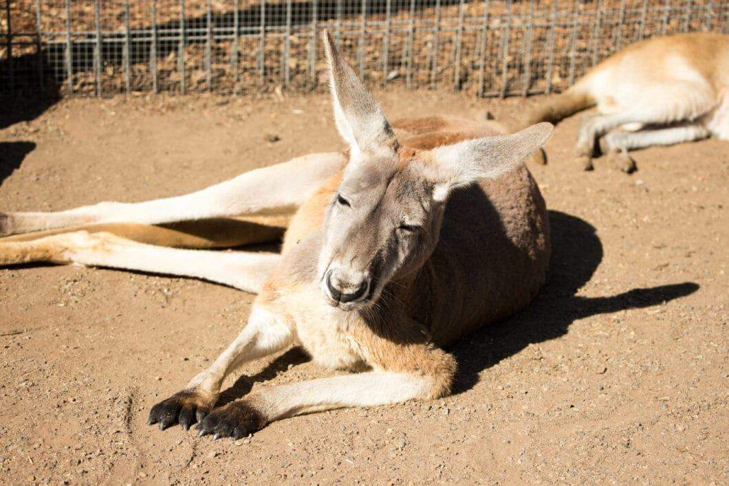 Kangaroos & Views! Visiting Featherdale Wildlife Park & The Blue Mountains