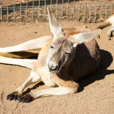 Kangaroos & Views! Visiting Featherdale Wildlife Park & The Blue Mountains