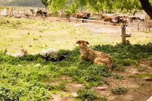 Don Daniel Ranch
