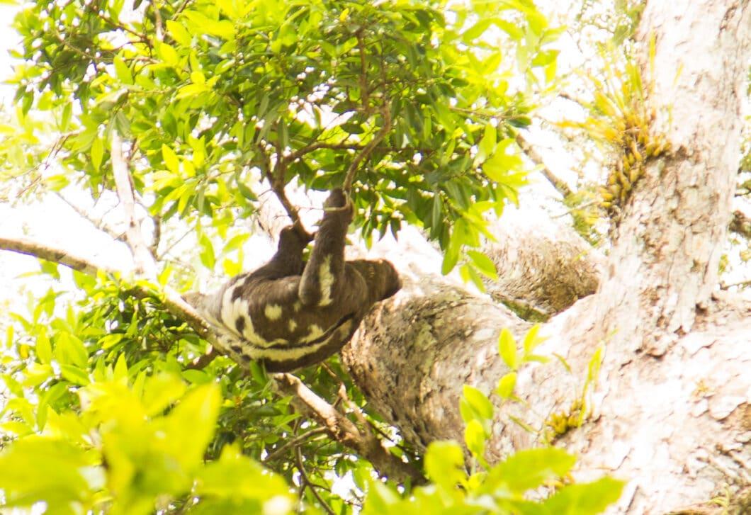 Spotting Wildlife in Peru's Amazon Rainforest