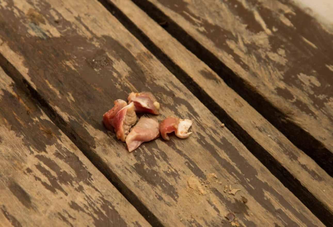 Our piranha bait - raw chicken!