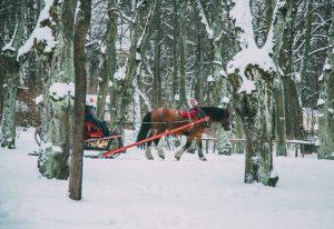 Sleigh Ride in St. Petersburg during winter