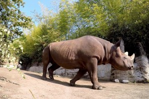 4 Great Reasons to Spend the Day at the Oregon Zoo