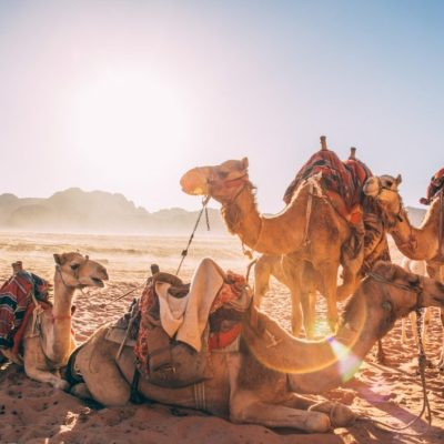 How to Spend 14 Days in Jordan & Egypt - The Ultimate Itinerary
