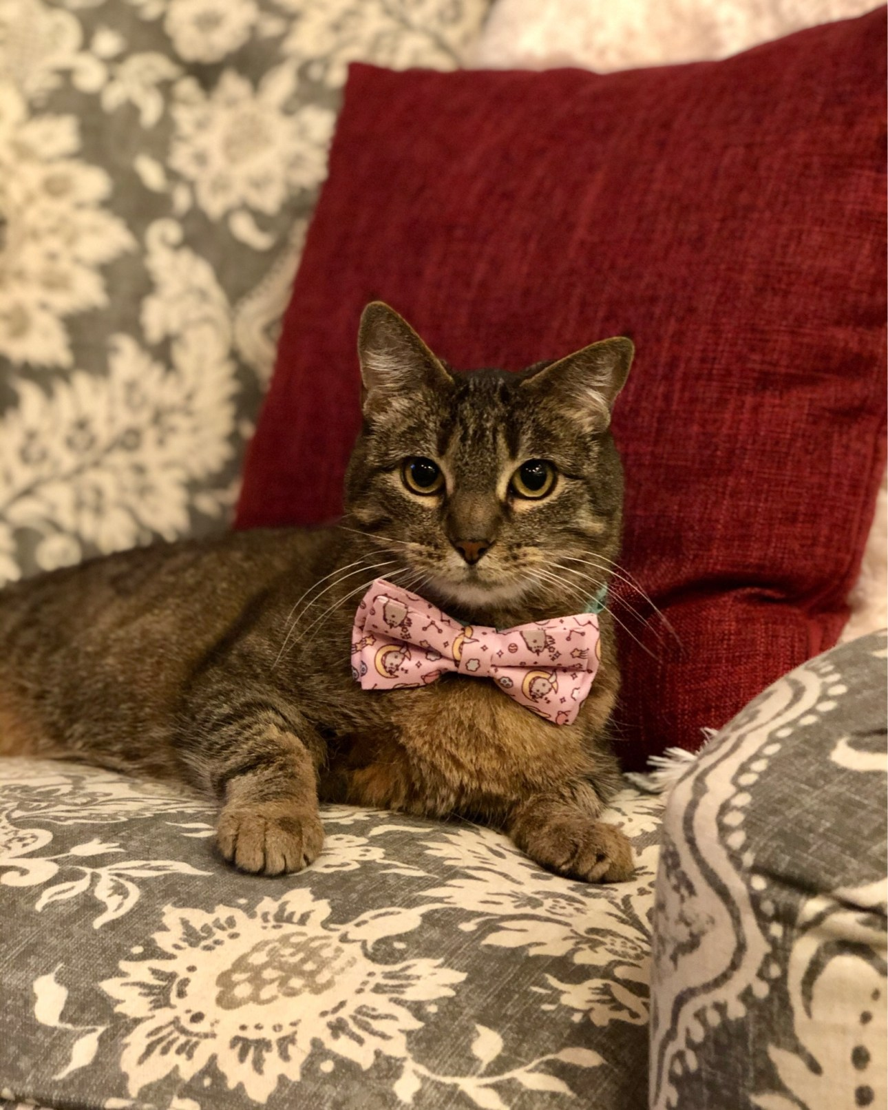 Miss Kitty in her bow tie!
