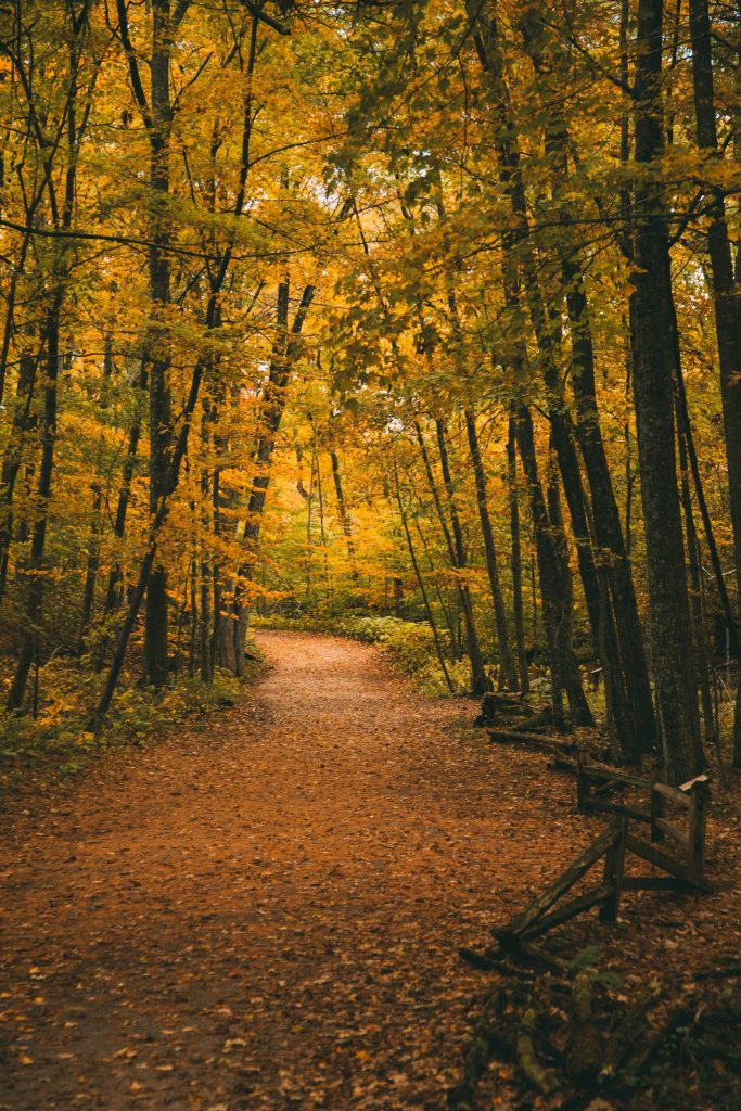 Whitefish Dunes State Park During Fall