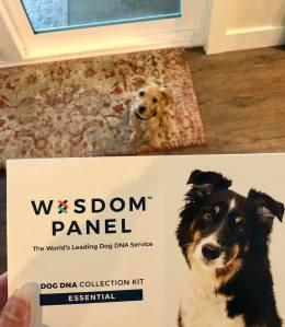 Wisdom dog panel DNA test