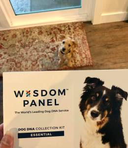 Wisdom dog panel DNA test