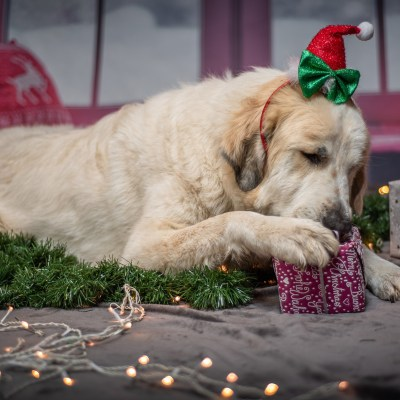 The Best Dog Christmas Gifts That You & Your Pup Will Love!