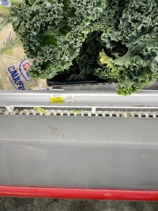 Kale Grocery Prices in Turks and Caicos