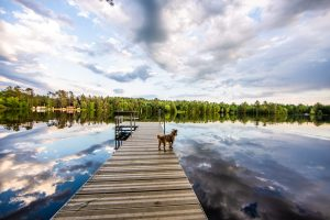 Buddy on the dock of our VRBO looking at the cloud's reflection in the water