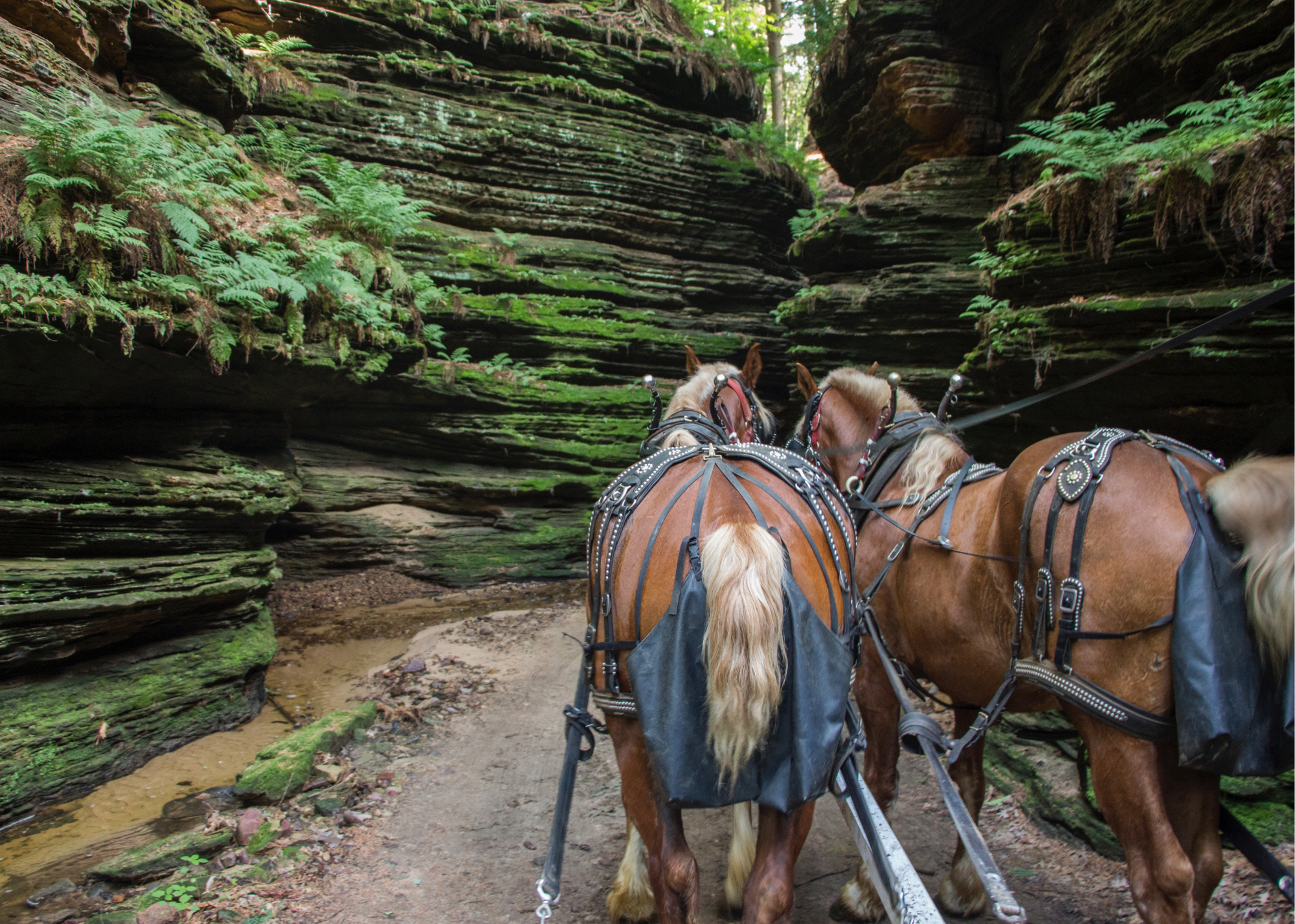 25 Awesome Things to Do in Wisconsin Dells by a Wisconsinite