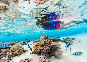 Try Shore Snorkeling on Bight Reef (Coral Gardens)