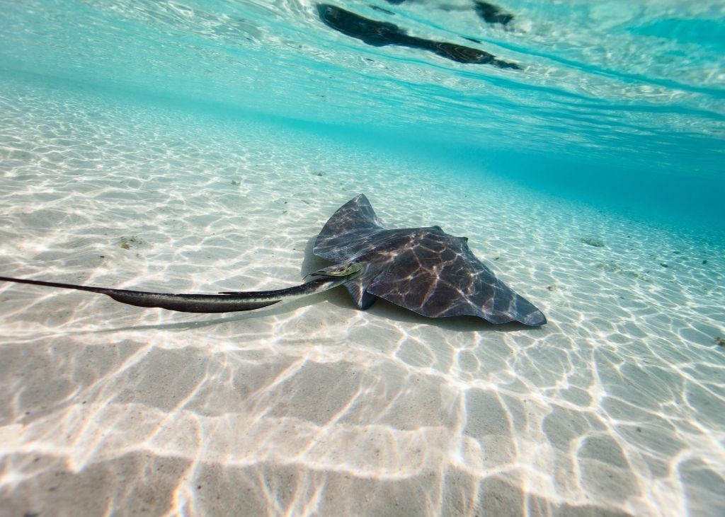 Best things to do in Turks and Caicos