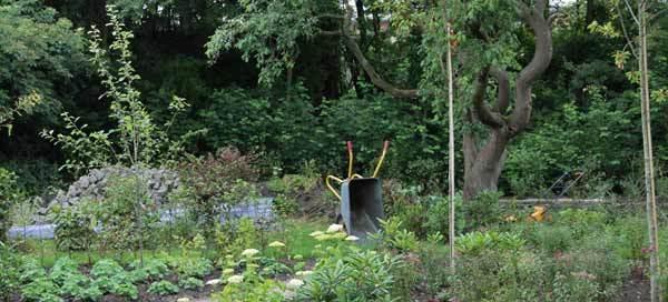 skovagtige have