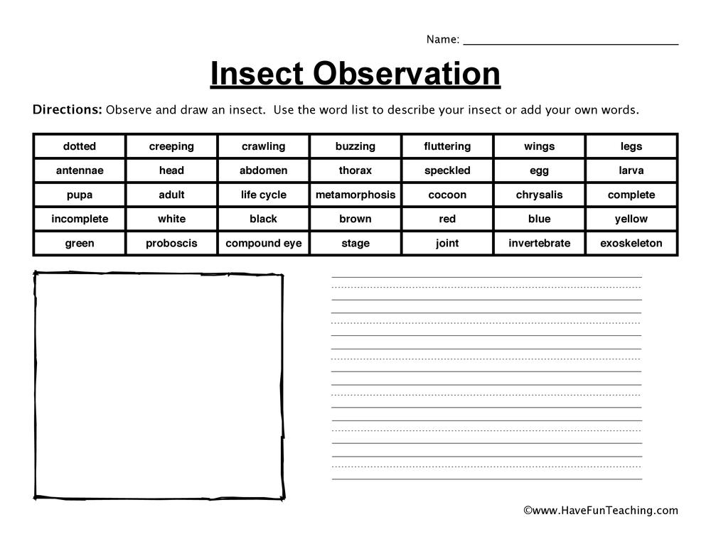 Insect Observation Worksheet