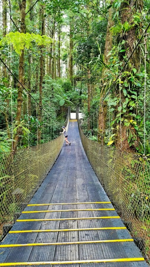 So You Want To Check Out Costa Ricas Rainforest Monteverde