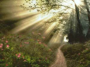 journey havoca silent voice