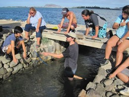 A team of University of Hawaii interns and researchers measuring water flow rates through the Heʻeia Fishpond.