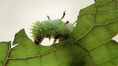 butterfly-caterpillar-story