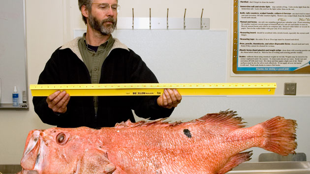 Shortraker Rockfish Feature