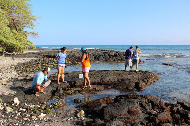 hilo-coral-pollution-research-students