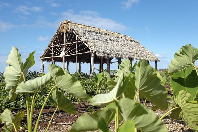 Sustainable Community Food Systems Program Awarded ʻĀina Ulugrant