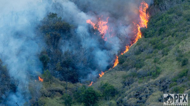 Manoa Ctahr Wildfire Study F