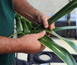 Weaving with palm leaves