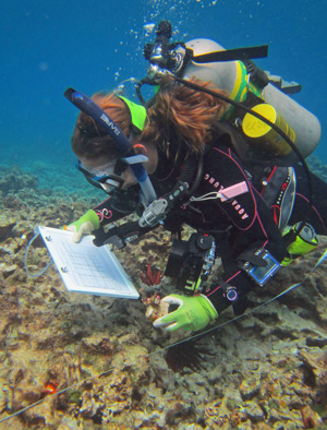 Nyssa Silbiger retrieving an experimental block from the reef