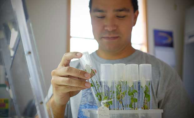 Keoni Kikala, a botanical support student assistant,  in the Hawaiian Rare Plant Program Micropropagation Laboratory in the Lyon Arboretum.