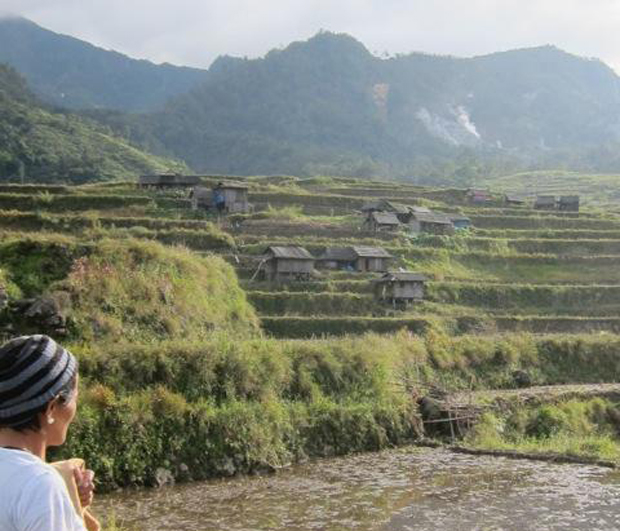 Terraced rice fields in the Philippines