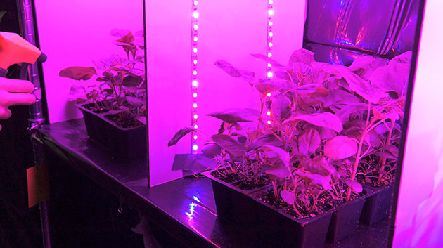 Manoa Engineering Plants In Space F