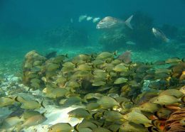 A variety of fish underwater