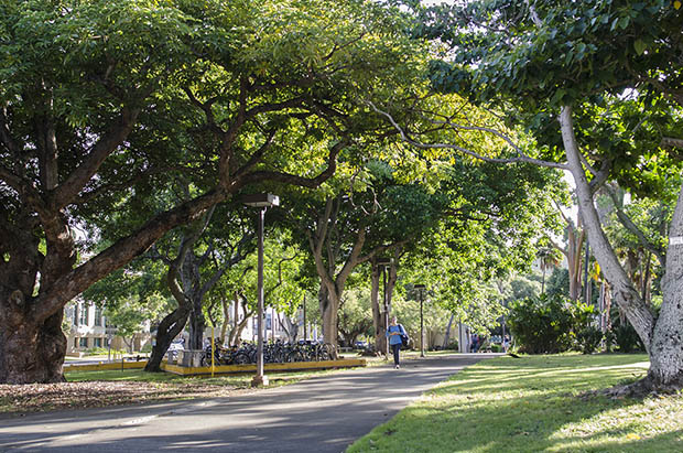 UH Mānoa Recognized As A Tree Campus USA