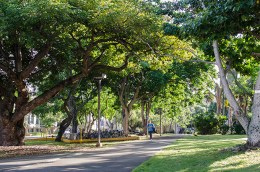 Tree-lined walkway on the UH Manoa campus