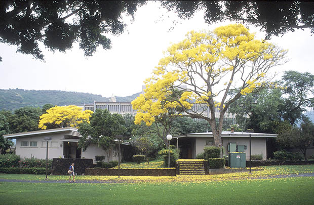 Exterior of Henke Hall with yellow shower trees