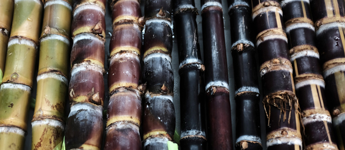 different types of sugarcane
