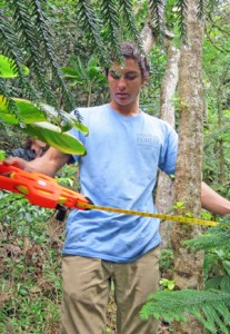 student measuring a tree in the forest
