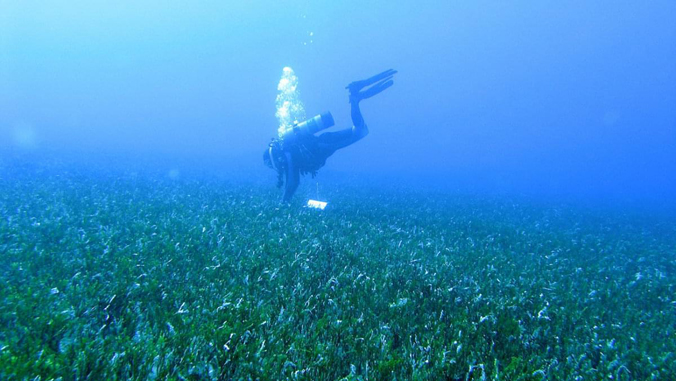 A diver collecting samples of algae.