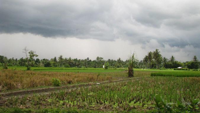 dark clouds over rice paddies