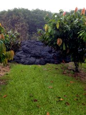 Small breakouts occur from an inflating pāhoehoe lobe in a privately owned orchard Tuesday, November 4, 2014. Photo courtesy of USGS/HVO