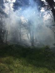 Smoke obscures the koa and 'ōhi'a forest at Nāmakanipaio Campground on Tuesday afternoon. NPS Photo/Luke Kittle