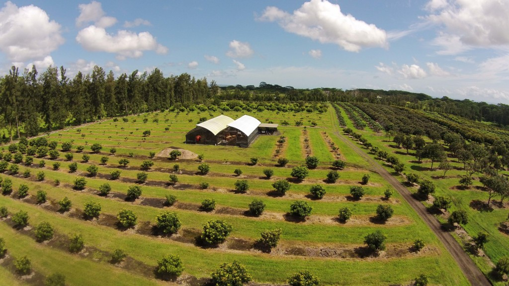 Organic Farms Big Island Hawaii