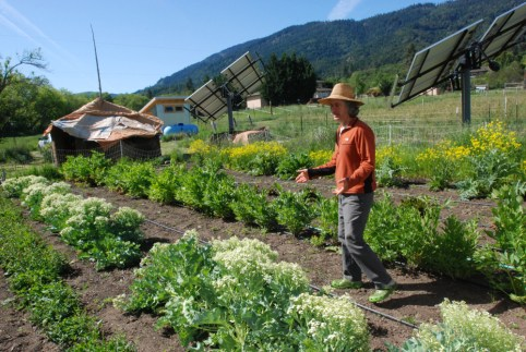 Big Island Organic Farms - man standing in his garden