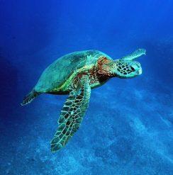 Hawaii Turtle Tours - Oahu adventure travel & ecotourism